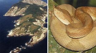 """""""Wyspa Węży"""": na jednym metrze kwadratowym zobaczysz kilka śmiercionośnych żmij"""