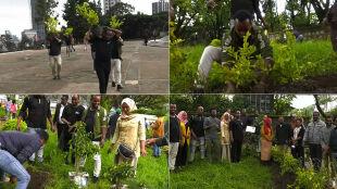 Etiopczycy zasadzili ponad 350 milionów drzew w 12 godzin