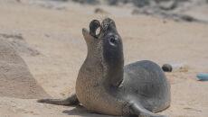 Plastikowe śmieci niebezpieczne dla ssaków morskich (Matthew Chauvin)